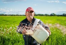 Photo of Hungarian farmers can receive hundreds of billions of HUF support